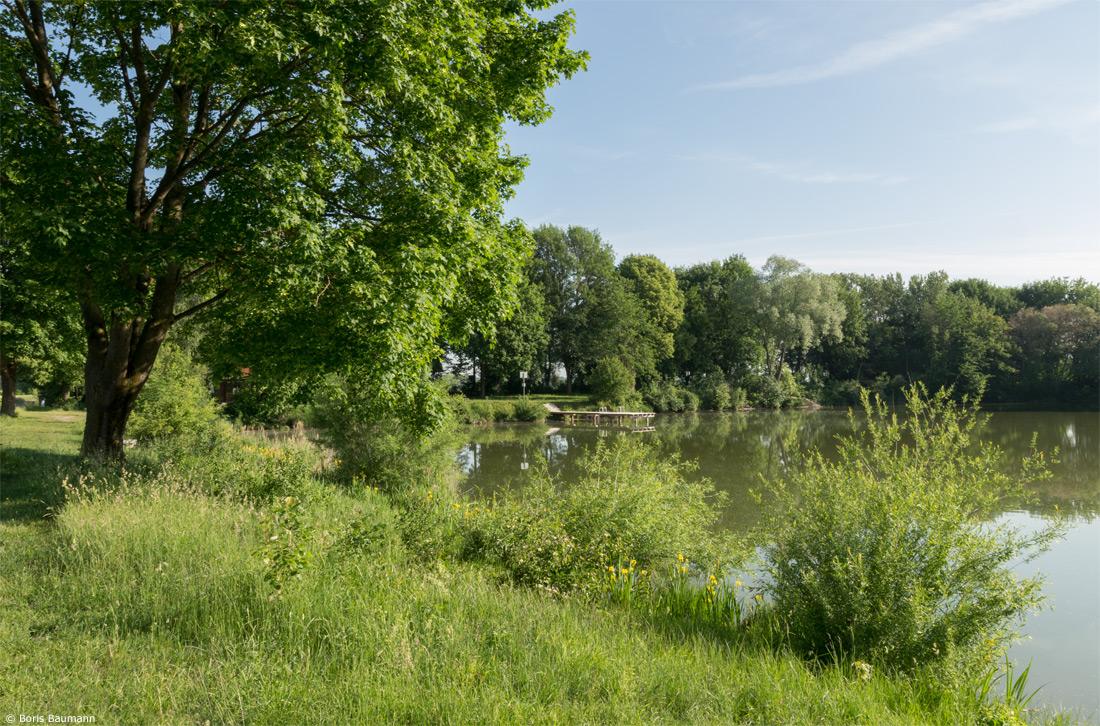 """Heiglweiher Haimhausen, Blick vom Westufer auf den """"Großen Steg"""" am Nordufer"""