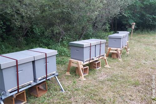 Bienen, Artenschutz, Haimhausen, Imker