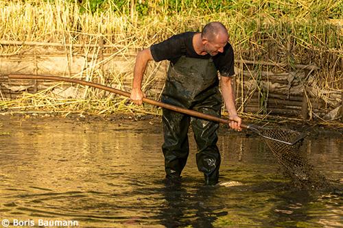 Fischerfreunde Haimhausen e.V., Abfischen der Fischteichanlage Inhausen, 2019