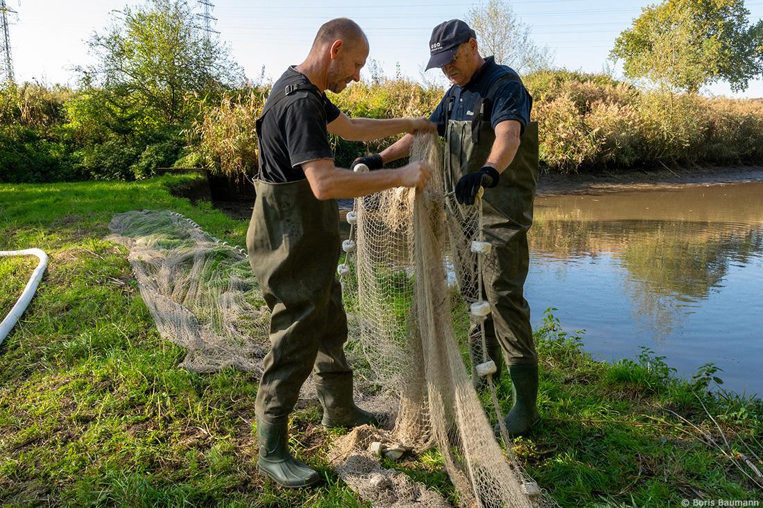 Fischerfreunde Haimhausen e.V. - Abfischen, Fischteichanlage Inhausen 2019