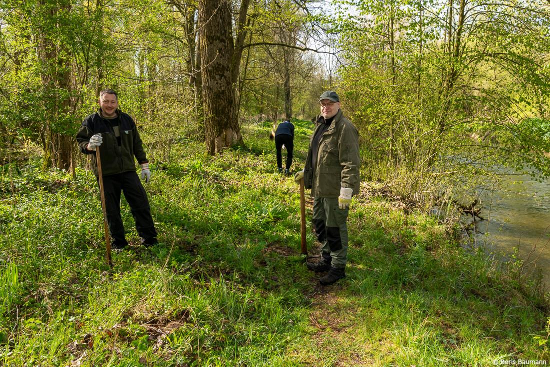Fischerfreunde Haimhausen e.V., Neophytenbekämpfung, Riesenbärenklau am Schwebelbach